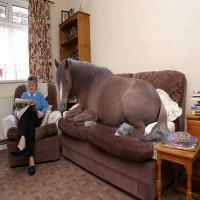 Hest føler sig hjemme