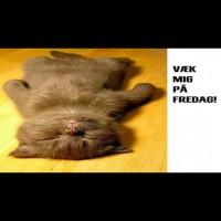 Væk mig på fredag